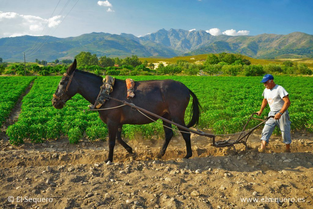 jardinera-pimenton-el-sequero