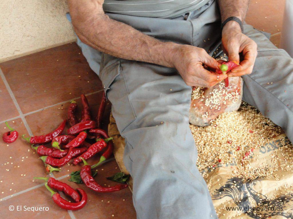 pimenton-ahumado-sequero-semillas