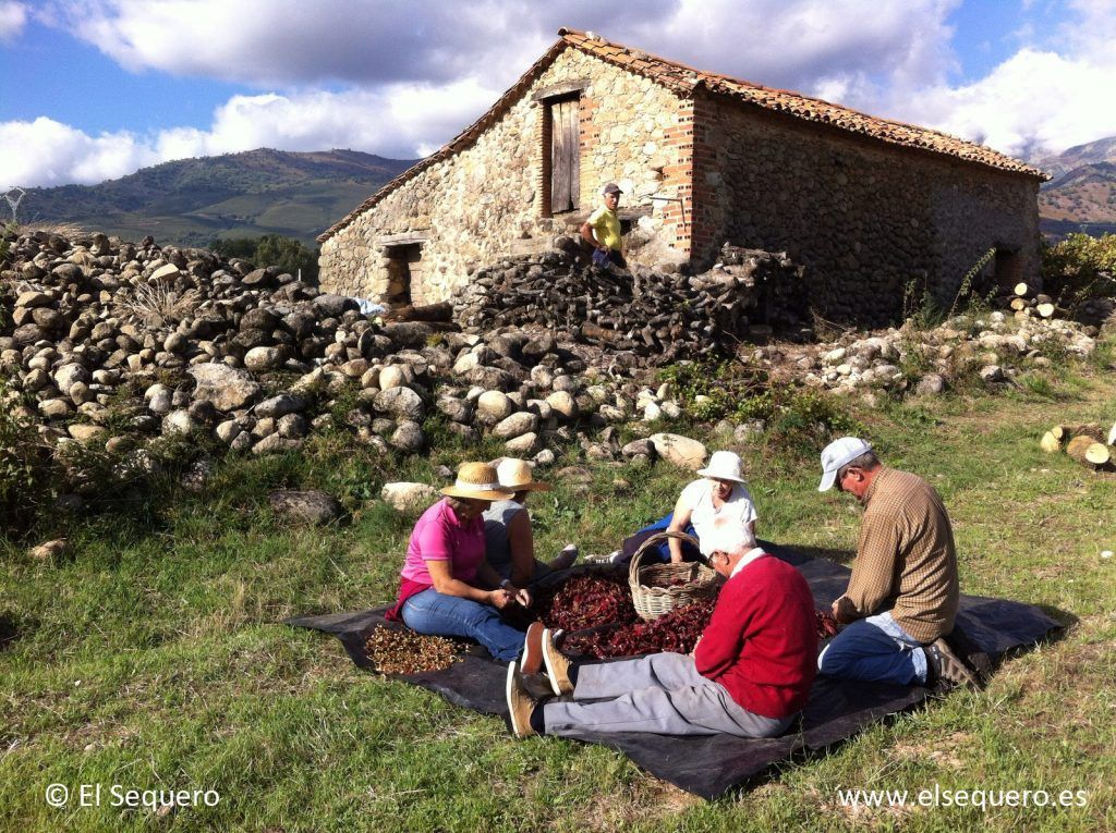 pimenton-ahumado-sequero-despezonando-2015-1