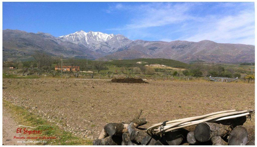 pimenton_elsequero_ preparando_ tierras