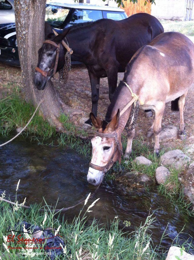 Mona y Mohína bebiendo en el arroyo